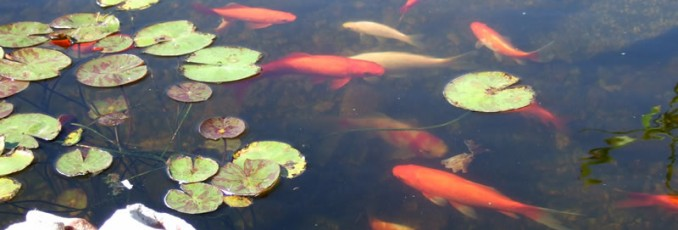 Pond supplies pond liner water garden supplies tips for Koi pond liner calculator