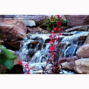 Picture for category Atlantic Water Gardens Pond Free Waterfall Kits