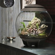 Picture for category biOrb Terrariums